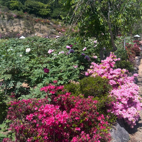 佐世保花園